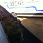 Blocked Gutters Require Cleaning
